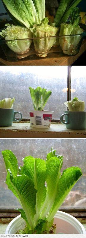 pin von 0177 8316779 auf garten pinterest hauspflanzen pflanzen und kr uter. Black Bedroom Furniture Sets. Home Design Ideas