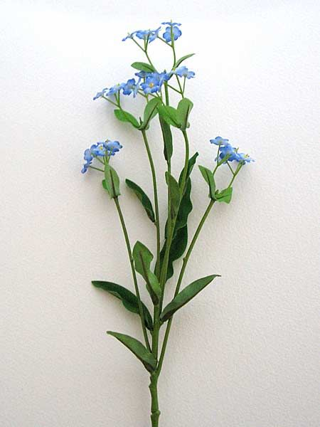 Forget Me Not Gardening Pinterest Forget Me Not Flowers And
