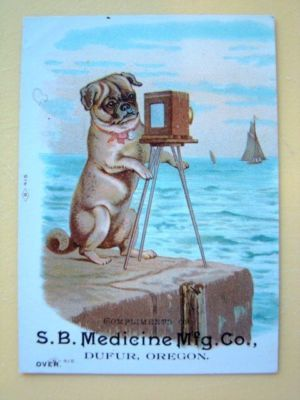 Advertising Hq Price Guide Cute Pugs Pugs Funny Pug Dogs For Sale