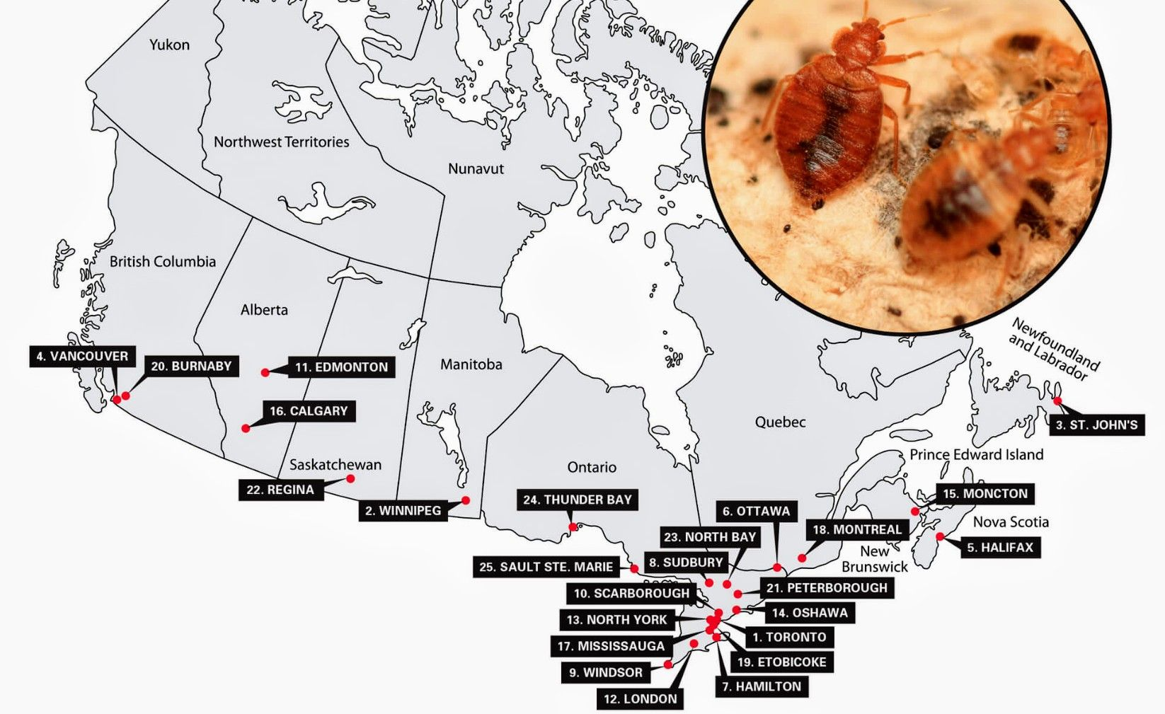 Don't get bit! Canada has a major bedbug problem. Where