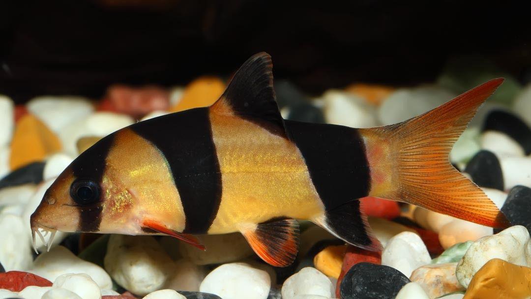 My Favorite Fish Fish Pet Fish Pet Care