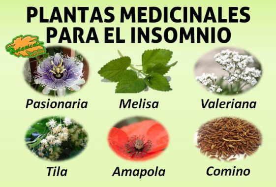 Pin en plantas utiles para la salud