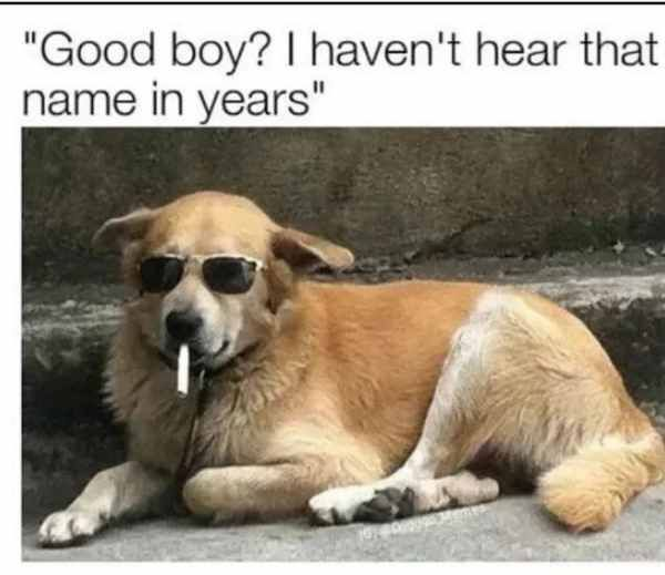 The Good Ole Times Trenduso Dog Dogs Goodboy Cute Adorable Sunglasses Shades Funny Hilarious Humor Funny Dog Memes Funny Dog Pictures Funny Dogs
