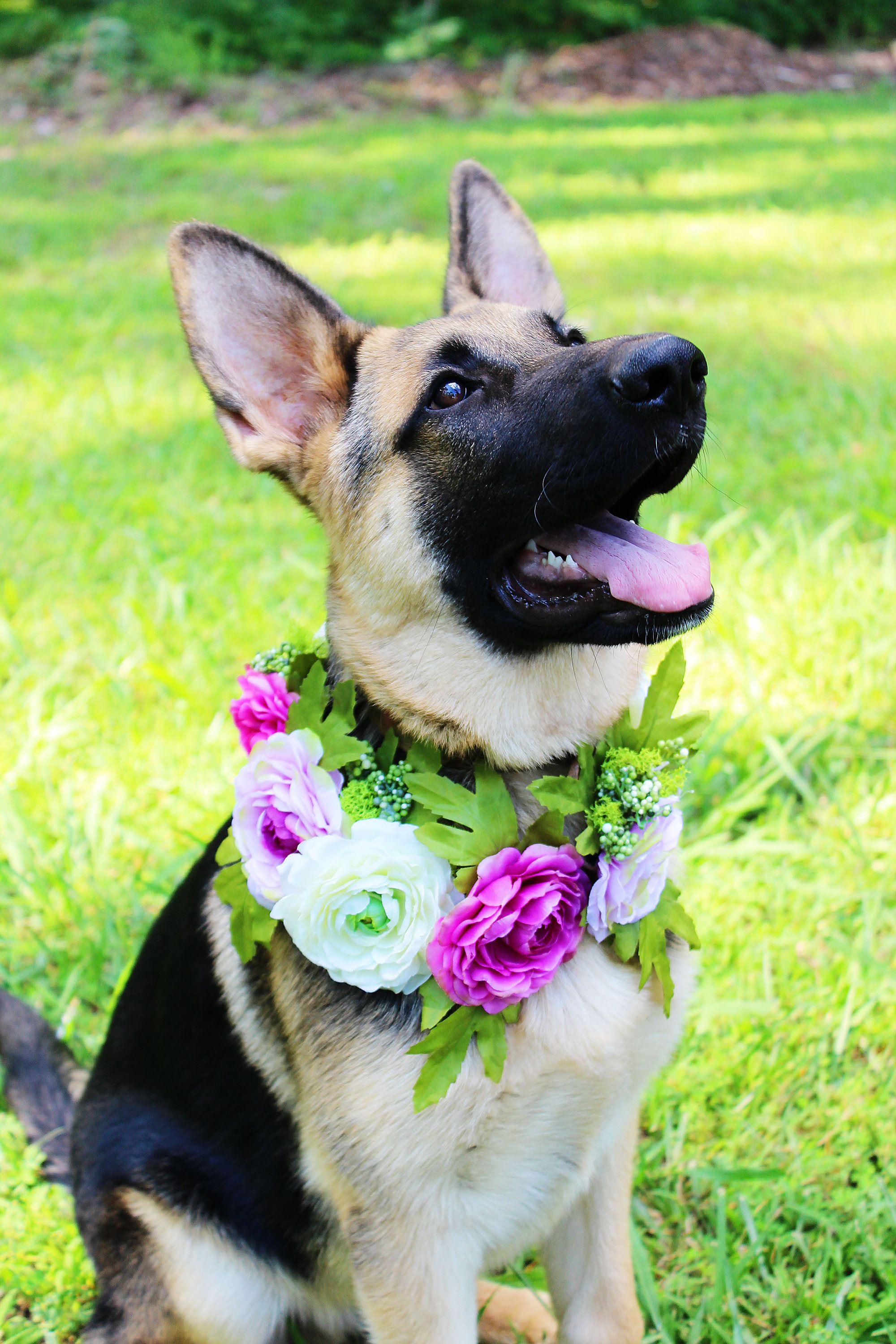 Dog Flower Crown Dog Neck Wreath Purple Dog Flower Crown Boho
