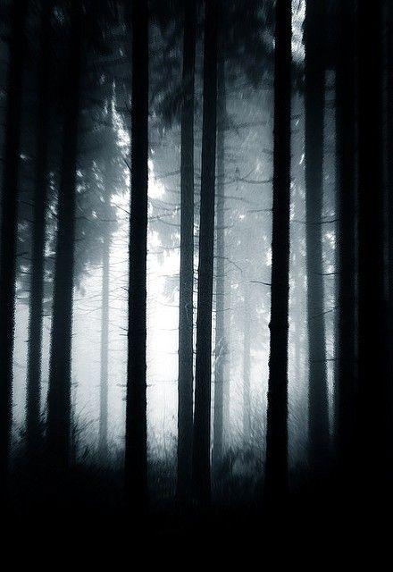 Verticals | Paisajes, Bosques y Cuadro