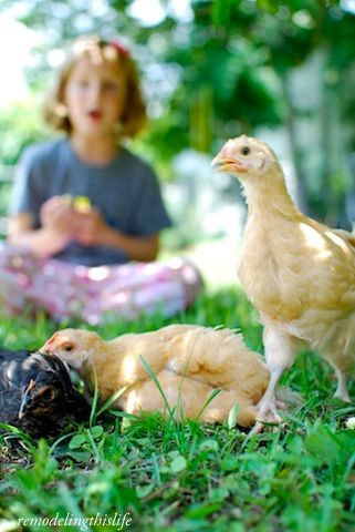 Life with Chickens...reminds me of my childhood days. I always loved playing with the chickens.