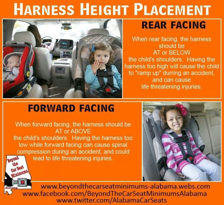 Car Seat Harness Car Free Engine Image For User Manual