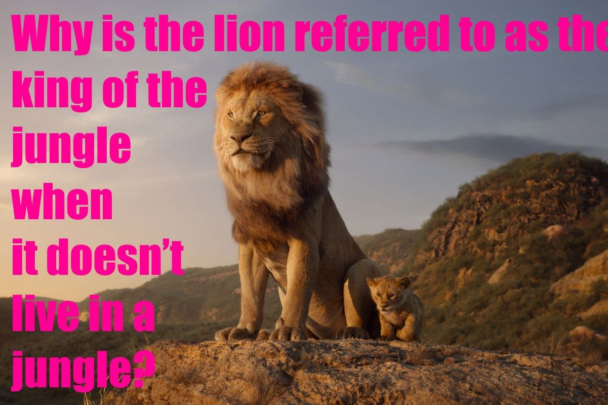 Why is the lion referred to as the king of the jungle when
