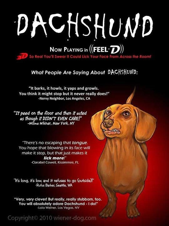 Dashound Meme Dachsies With Moxie Dachshund Fun Dachshund