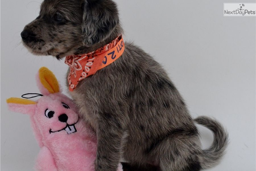 Pets For Sale Ocala Florida References