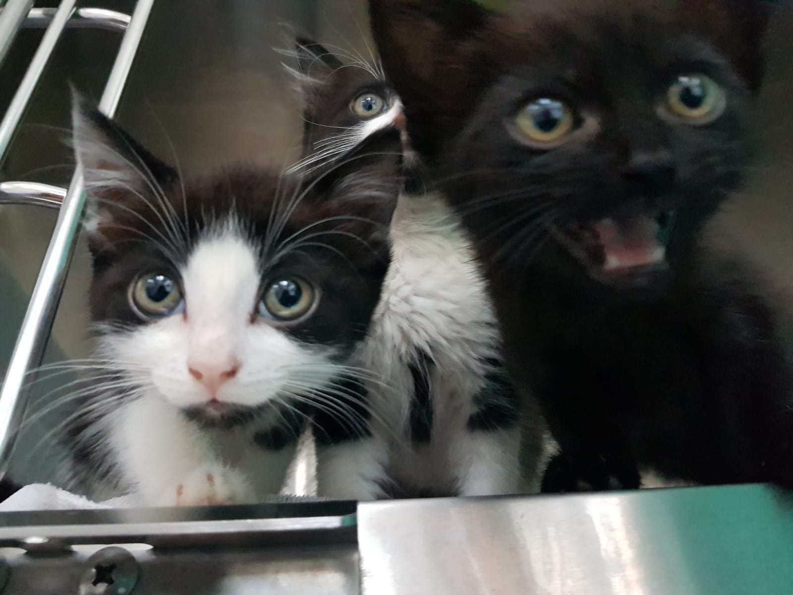 Eight Week Old Abandoned Kittens Had The Worst Flea Infestation Mayhew Vets Have Ever Seen Cat Has Fleas Flea Infestation Kittens