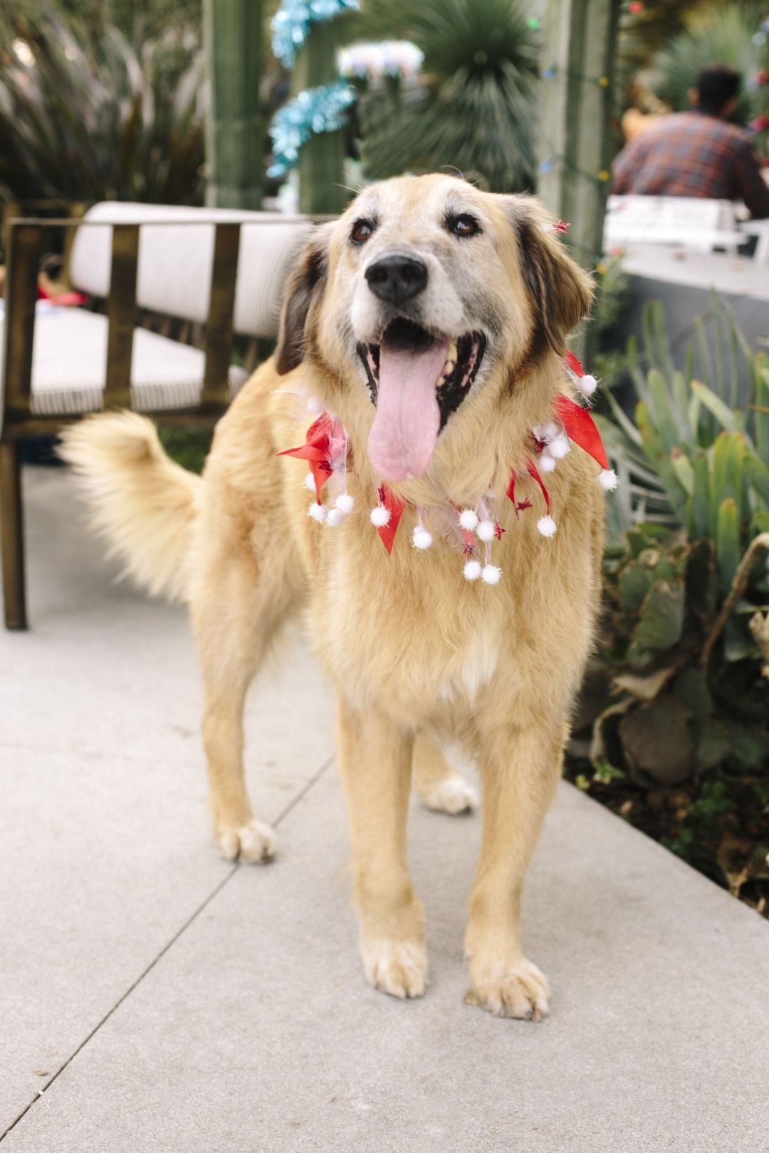 Craigslist Los Angeles Pet Services - Pets and Animal ...