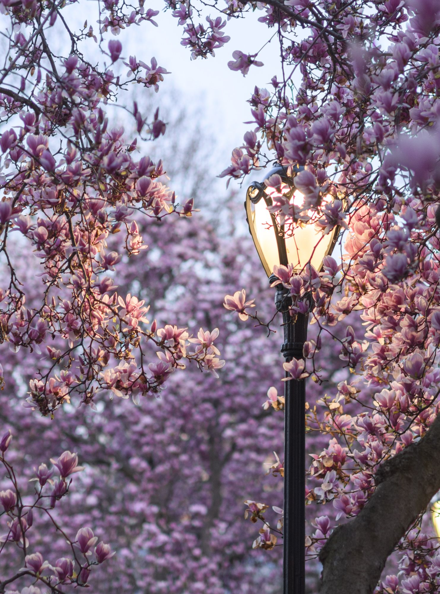Central Park in spring by Lane, author and