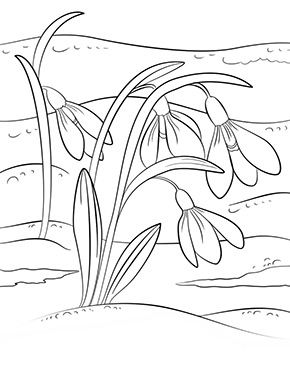 Ausmalbild Frühling - vier Schneeglöckchen Ausmalbilder