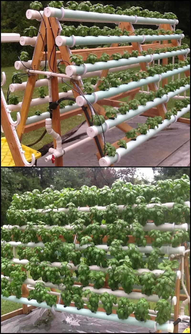 Vertical garden with hydroponics in Summerland