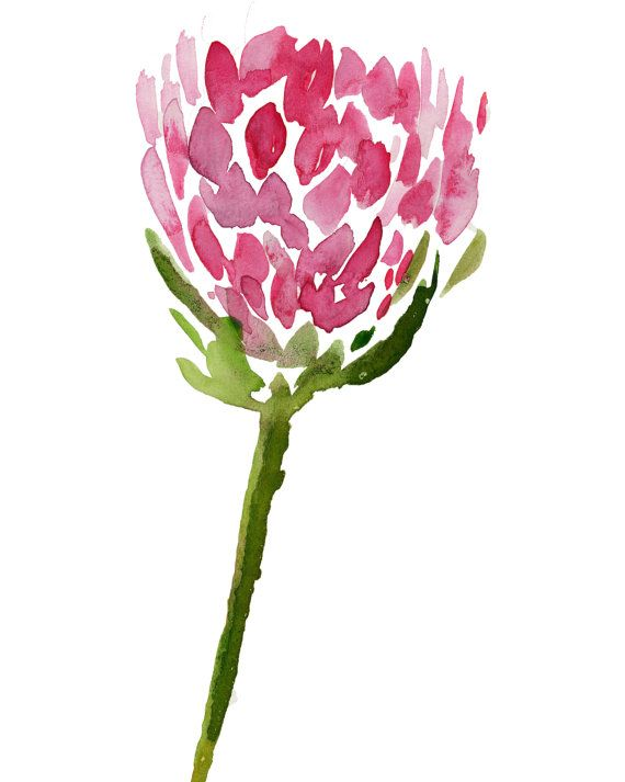 Pink Protea Watercolor Island Chic Minimalist Coastal Chic