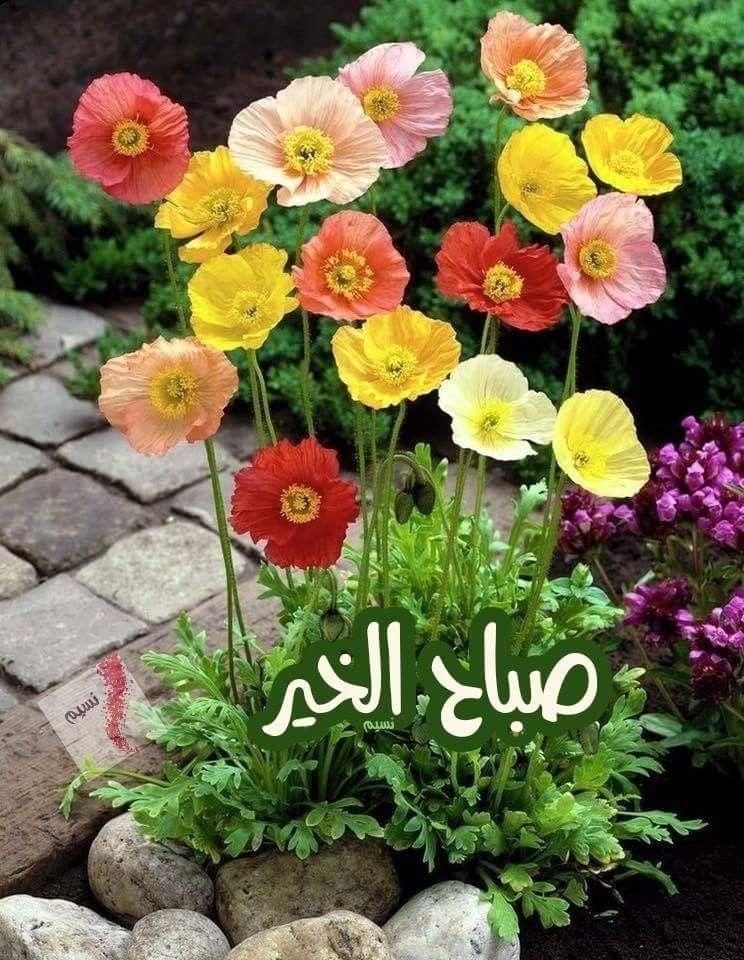 صباح ملون بلون الورد لقلوبنا الطيبة التى تعاني ومع ذلك مازالت تستشعر الخير حتى وإن خذلتها الحياة Flower Pictures Poppy Garden Poppy Flower
