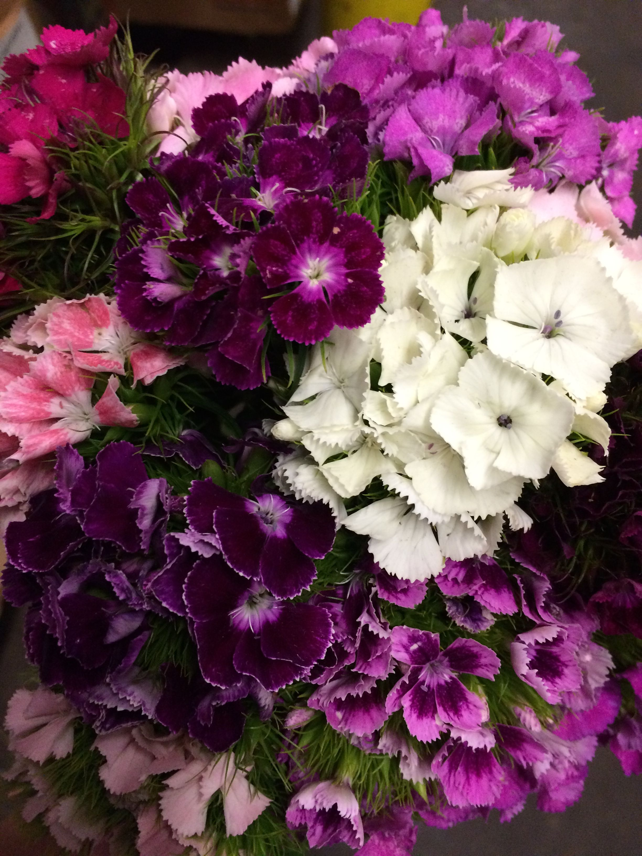 Assorted Bunches Of Sweet William In Purples Pinks Lavenders And
