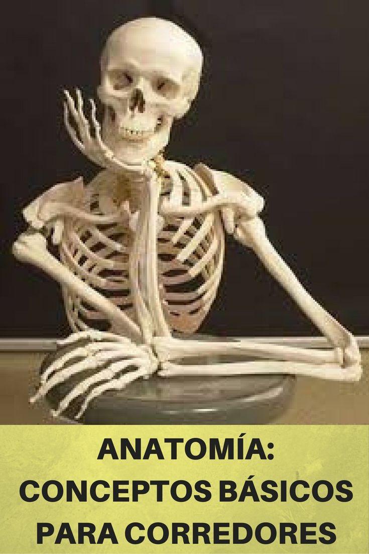IMPORTANTE] Te contamos TODO lo que tienes que saber de anatomía ...