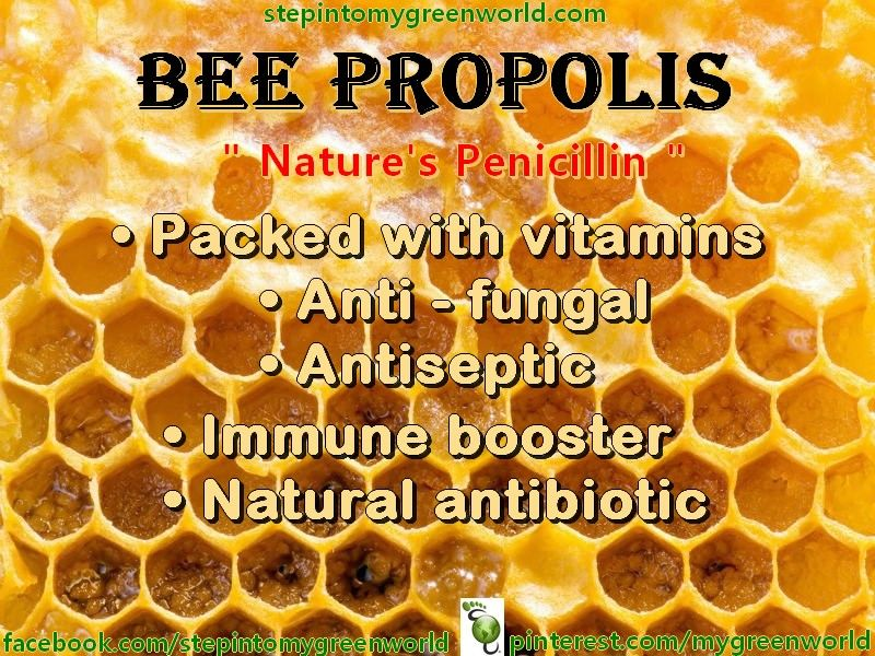 bee pollen health benefits pdf