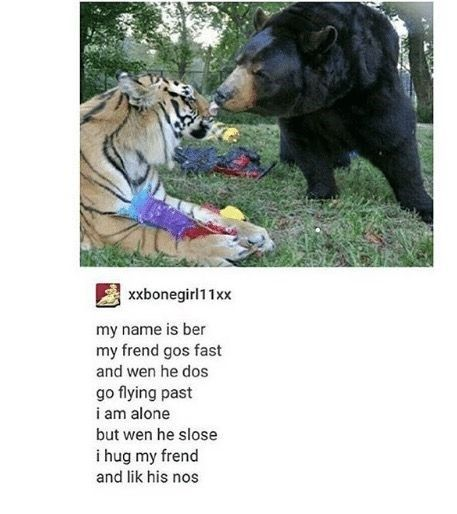 Here Are Some Funny Animal Poems To Brighten Up Your Day