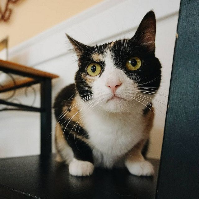 The Top 7 Reasons Cats Avoid The Litter Box (With Images