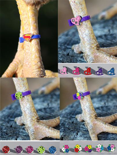 Chicken Charm Poultry Leg Bands - Free Shipping | chickens | Raising