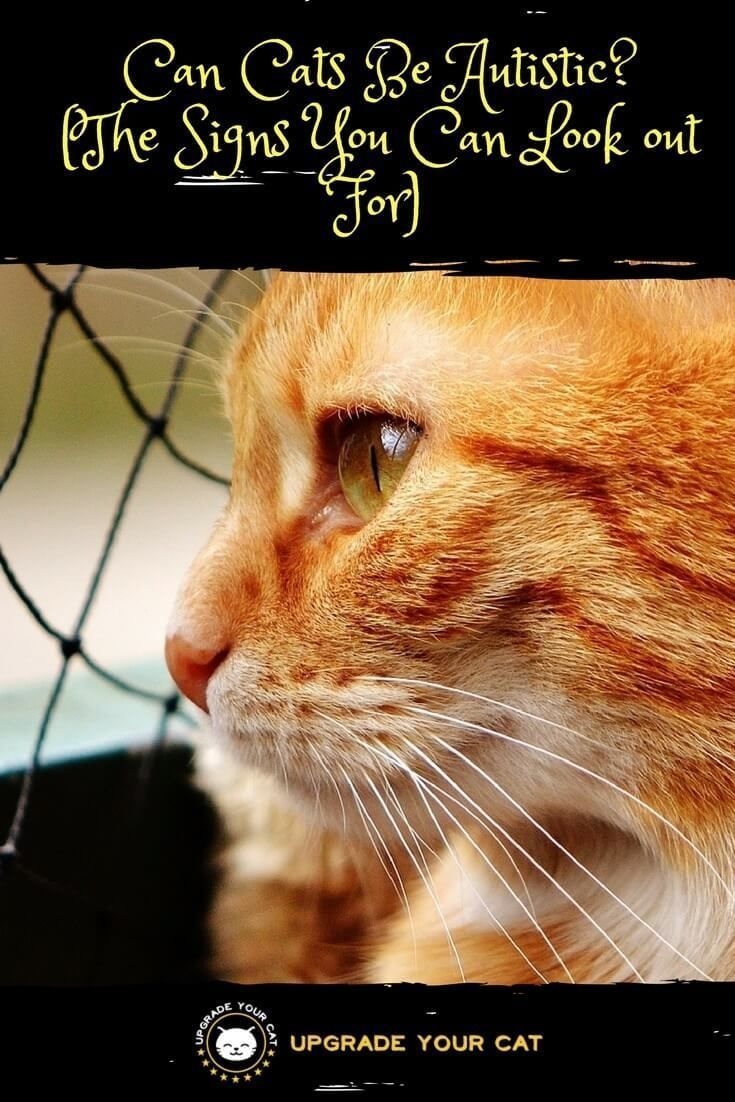 Can Cats Be Autistic? (The Signs and Behaviors to Look out