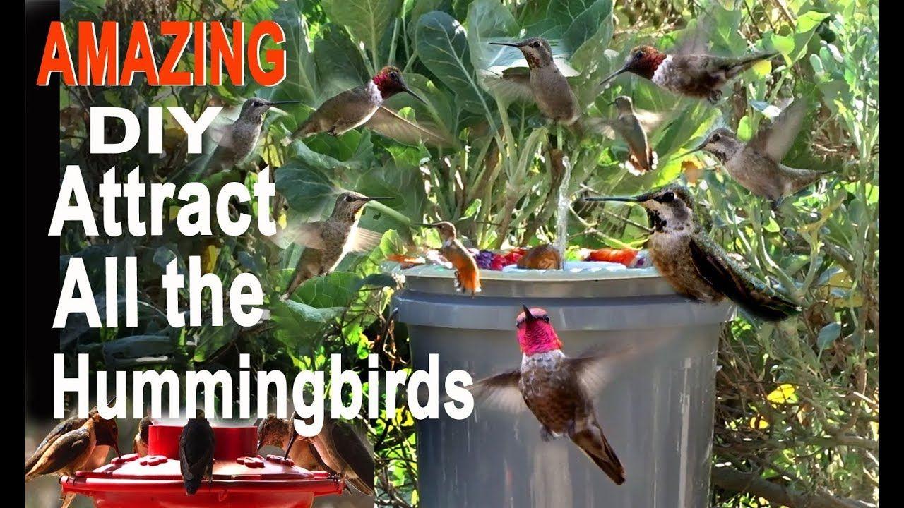 Endless Water Hummingbird Bird BathCHEAP DIY Attracts