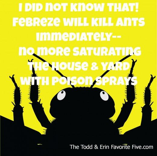 how to kill ants without poison