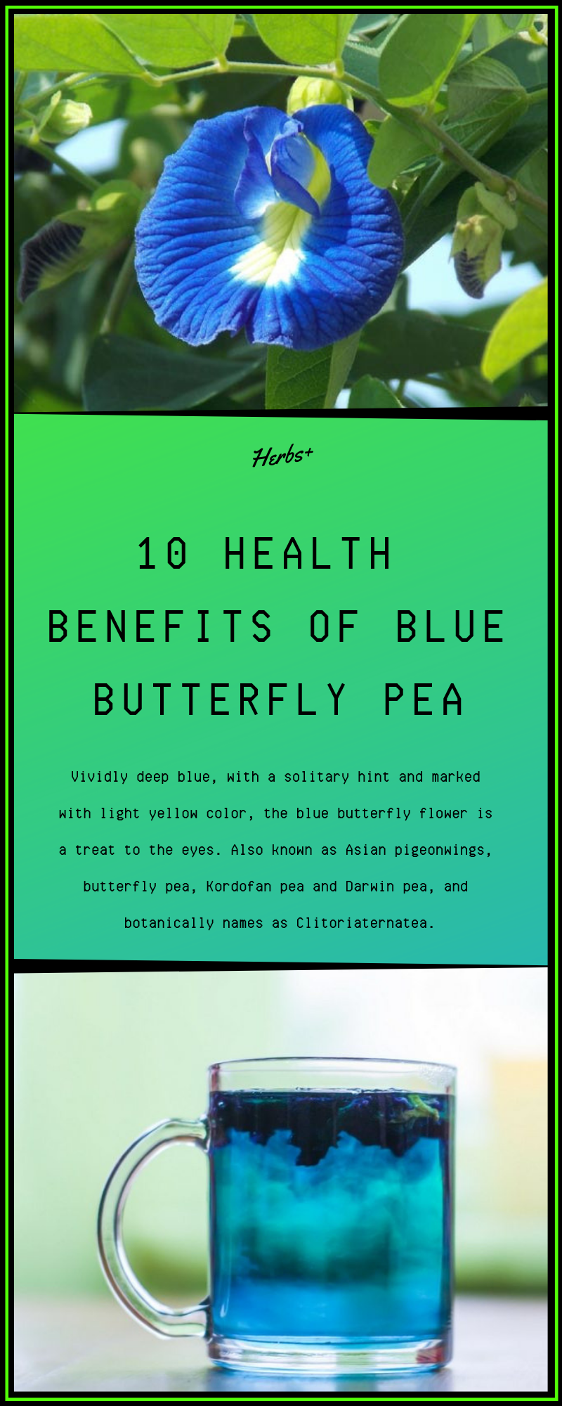 10 Health Benefits of Blue Butterfly Pea Butterfly pea