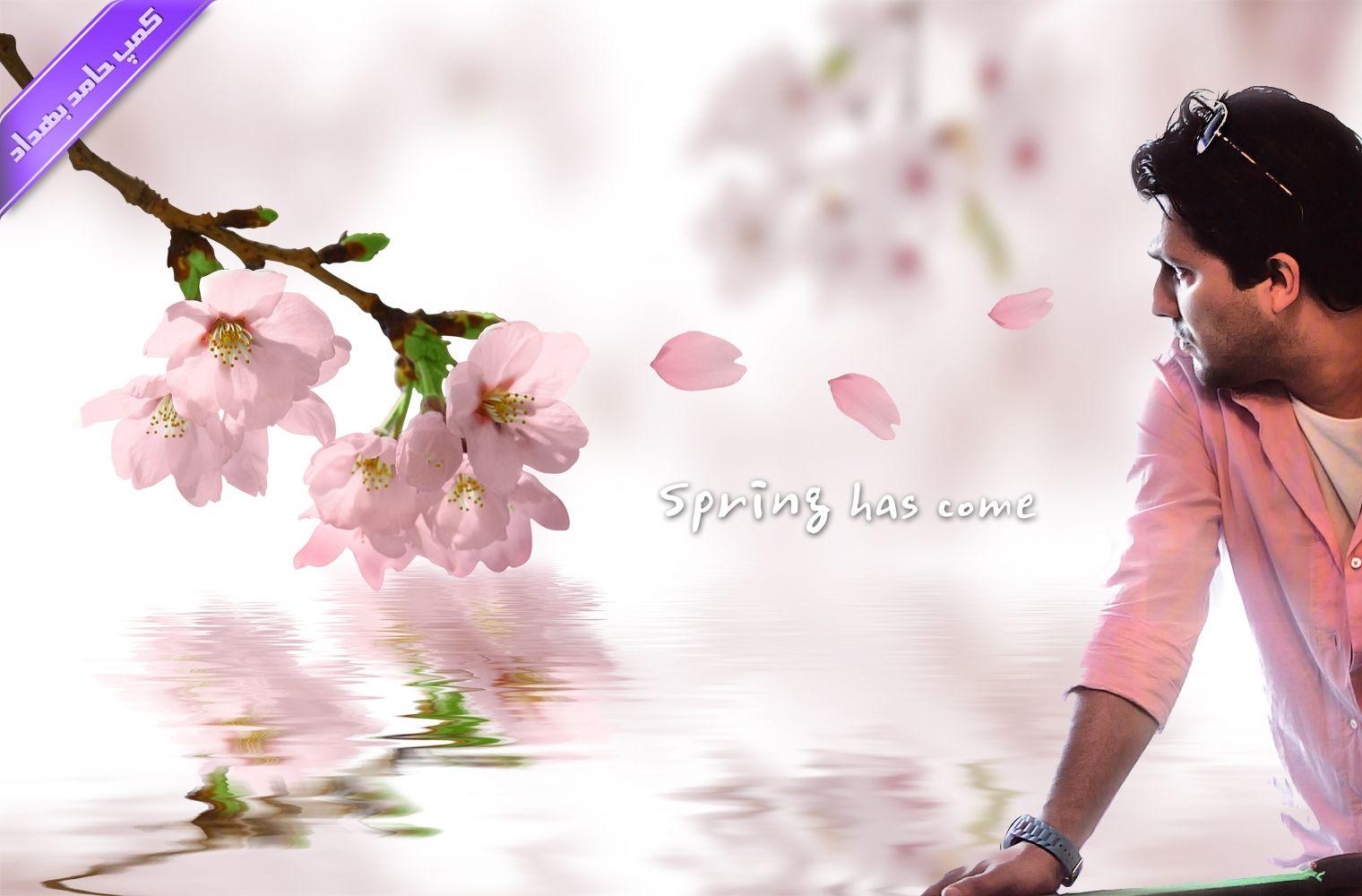 Hamed Behdad In 2020 Japan Flower Cherry Blossom