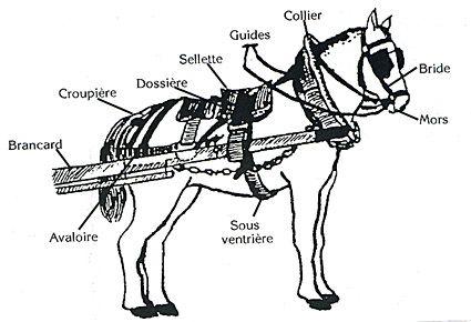 attelage cheval