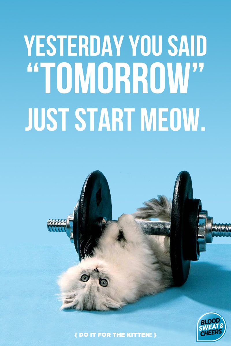 Pin By Christina Castro On Cats Are Better Than You Fitness Motivation Quotes Motivation Fitness Motivation