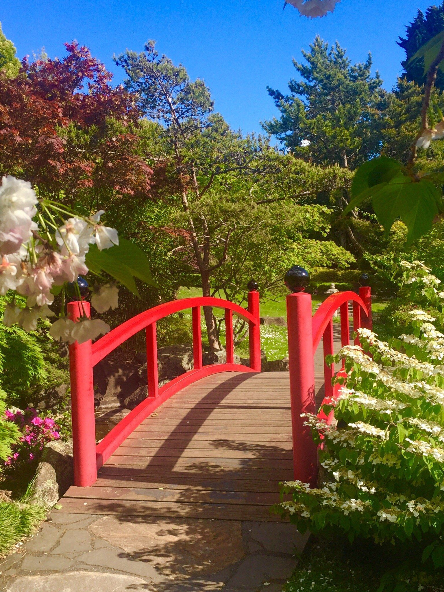 Fantastic Japanese garden Review of Royal Tasmanian