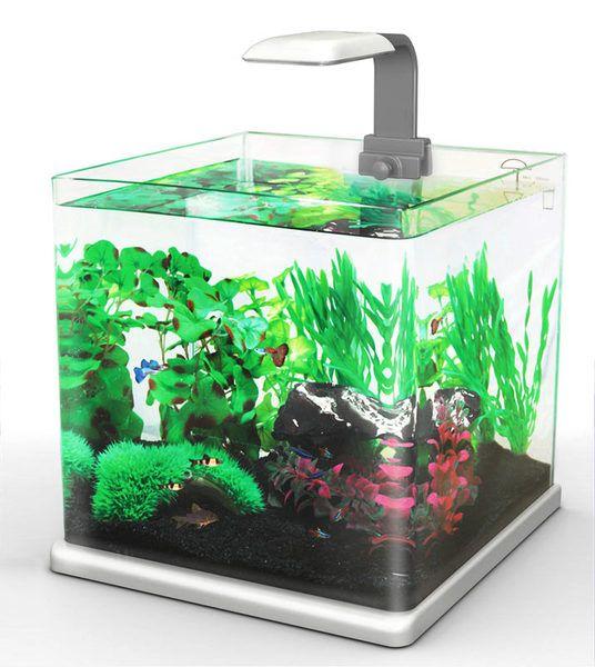 Hailea Akwarium Q25 Z Filtrem I Oswietleniem Led 3872801735 Oficjalne Archiwum Allegro Aquarium Terrarium Decor