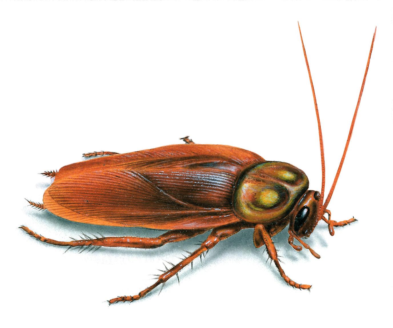 The Cockroach Problem In The House Cucarachas Ilustraciones De