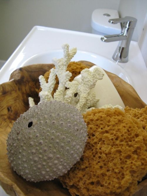 coral, sponges and sea urchins in the bath