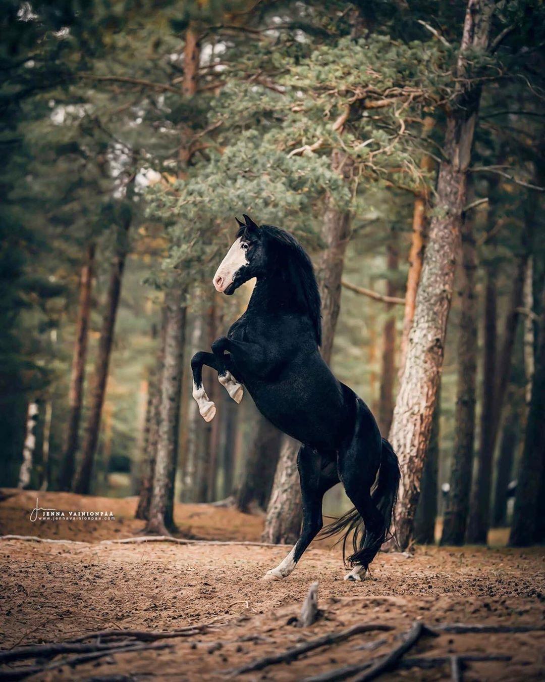 #horsepattern