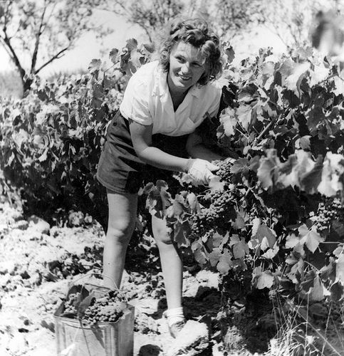 Licensed under creative commons, free to use. Celine in vineyard?
