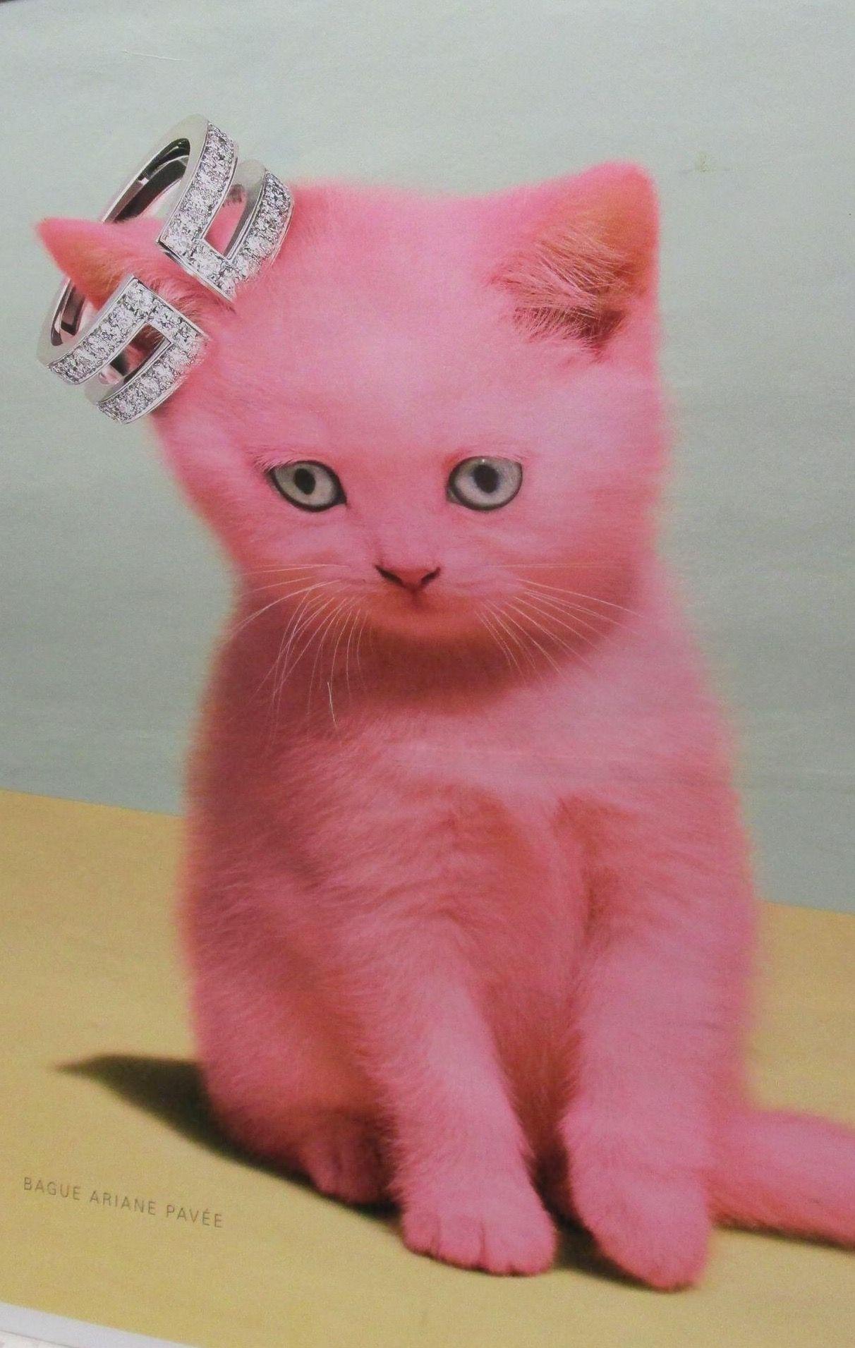 Pink Kitten Paris Subway Advert Poster Photo Credit Pamela Bliss Kitten Feline Pets