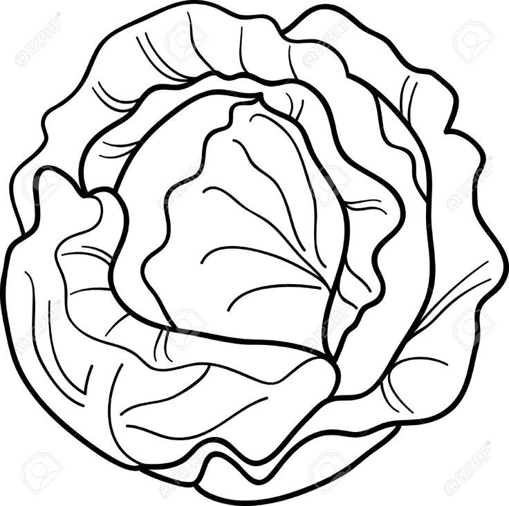 Image Result For Printable Lettuce Clipart Black And White Vegetable Coloring Pages Coloring Pages Black And White Cartoon
