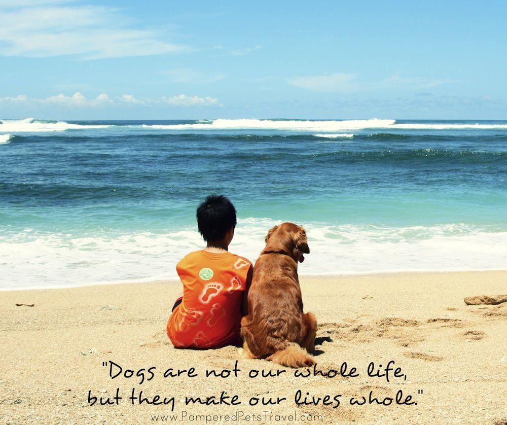 pamperedpetstravel.com Dog Quotes #travel #trip #traveling ...