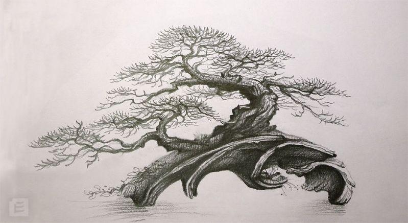 Moje Nova Prace Atelier Bonsai Element Stranka 3 Bonsai Art Bonsai Tattoo Japanese Tree
