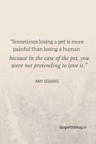 Losing A Pet Quotes