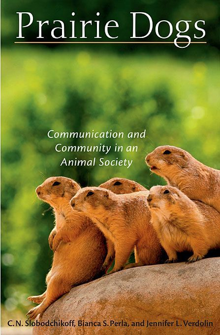 The authors synthesize the results of their long-running study of Gunnison's prairie dogs (Cynomys g... - #authors #gunnison #results #running #study #synthesize #their - #KeystoneSpecies