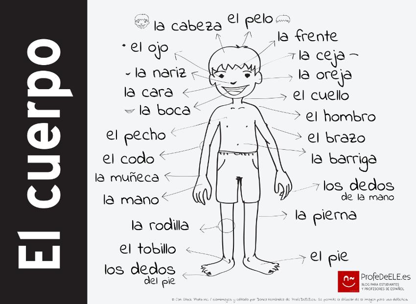 Vocabulario del cuerpo humano: http://bit.ly/voc-cuerpo  Más ...