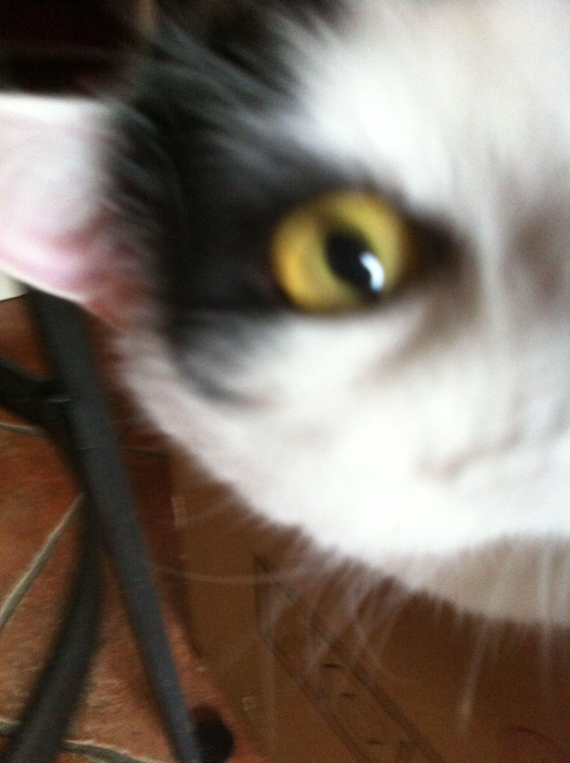 Look me in the eye Baby!