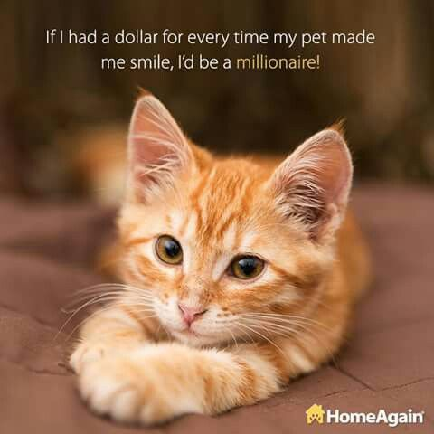 If I Had A Dollar For Every Time My Pet Made Me Smile I D Be Rich Cats Orange Kittens Cat Adoption