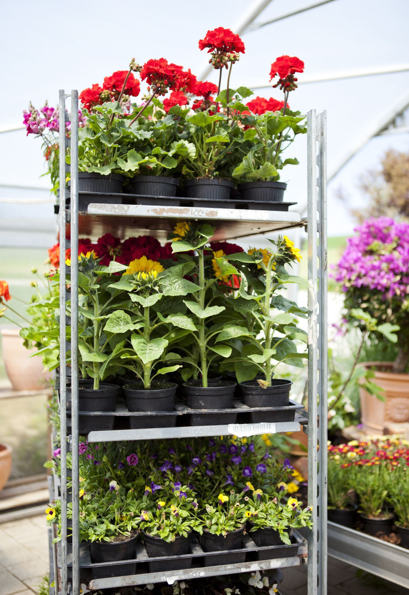 Shopping for plants? Here's how to buy more for less